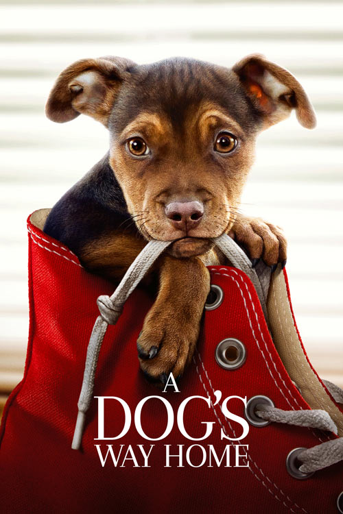 فیلم A Dog's Way Home 2019