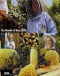 The-Wonder-of-Bees-2014