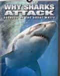 NOVA-Why-Sharks-Attack